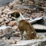 またメキシコ地震今度はM7.1