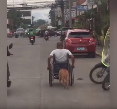 【出典:YouTube】飼い主が乗った車いすを押すフィリピンの忠犬