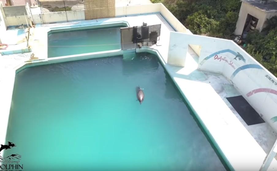 【出典:YouTube】閉館した犬吠埼マリンパークに取り残されたイルカのハニー