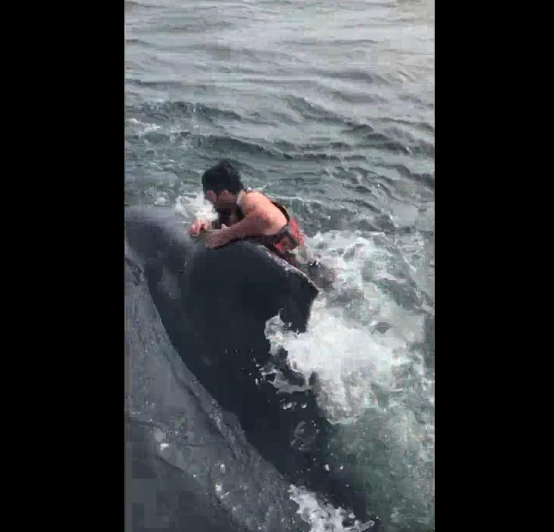 【出典:Liveleak】船からザトウクジラの背中に飛び乗り救助に挑む漁師