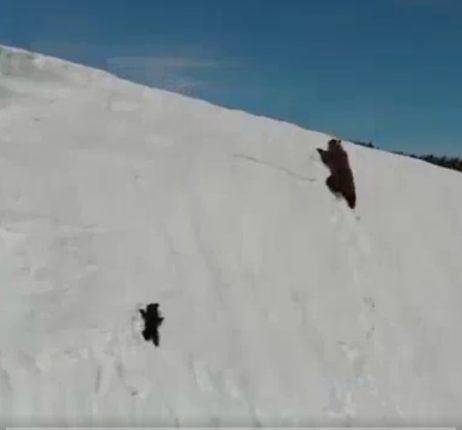 【出典:Mutlu Civiroglu/Twitter】雪山を登る熊の親子