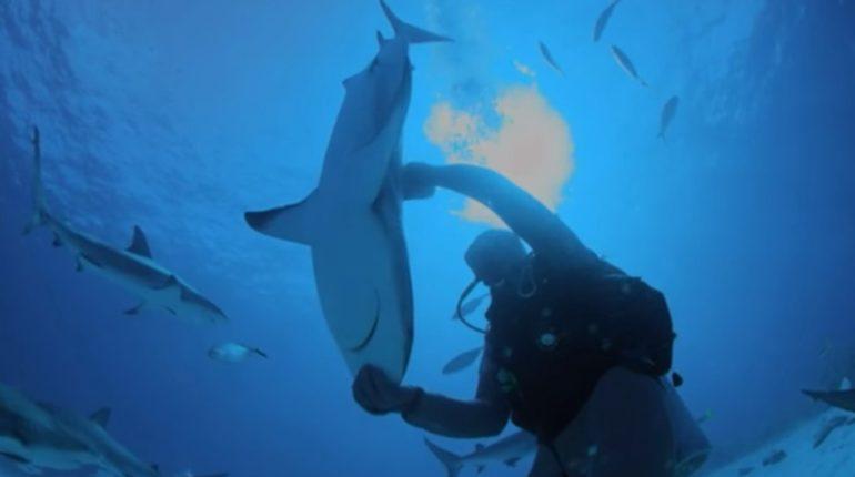 【出典:Discovery Canada/YouTube】人の手のひらで逆立ち状態のサメ