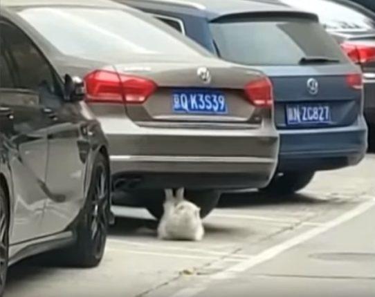 【出典:News flare/YouTube】車の車体下で見事な腹筋を披露するネコ