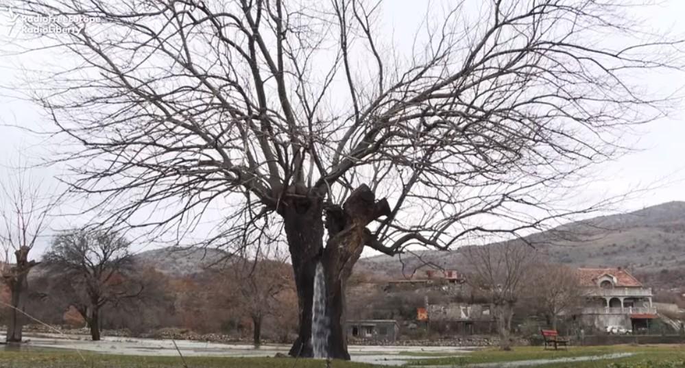 【出典:YouTube】水が溢れる木