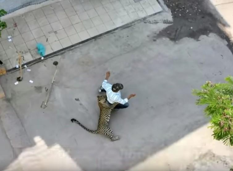 【出典:Fox News/YouTube】インドの人々を襲う野生のヒョウ