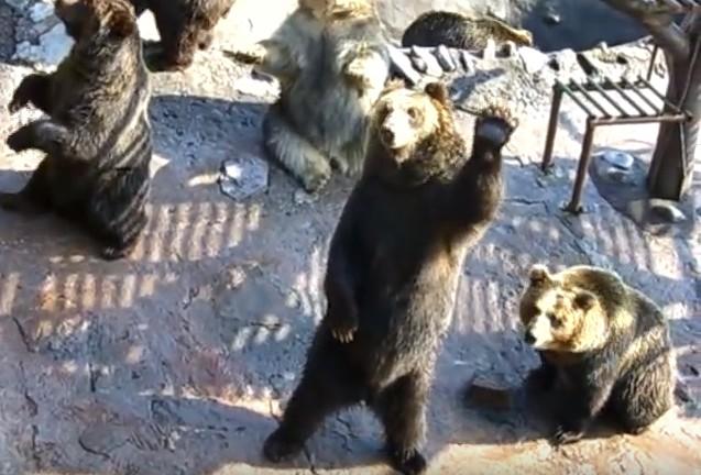 【出典:YouTube】来援客に手を振るまるで人間のようなクマ