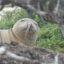 【出典写真:NOAA Fisheries / Brittany Dolan】鼻の穴にウナギが刺さったアザラシ
